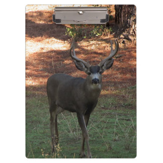 Blacktail Buck Clipboard