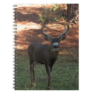 Blacktail Buck Notebook