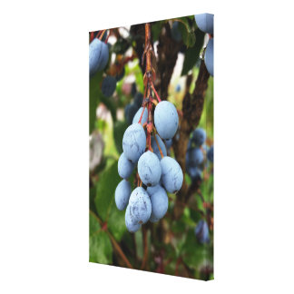 Blackthorn fruit canvas print