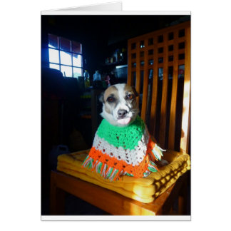 Blaheen of the roads dog Nuala in her new  poncho Card