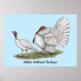 Blanc Hollands de dindes
