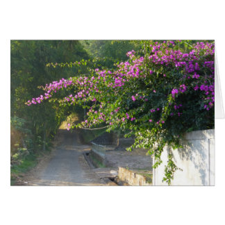 Blank Card - Bougainvillea on a wall