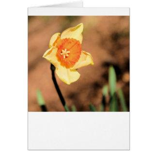Blank card Daffodil