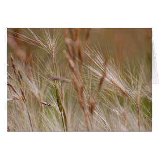 Blank Card - Feathered Grasses