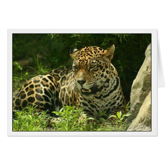 Blank Card- Jaguar Photo Card