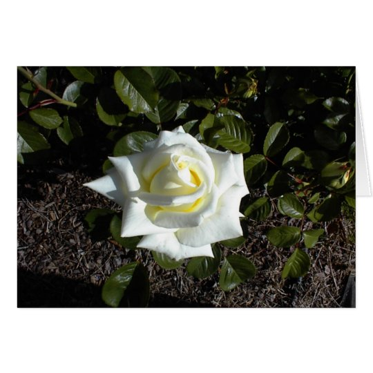 Blank card: One Pale Yellow Rose Card