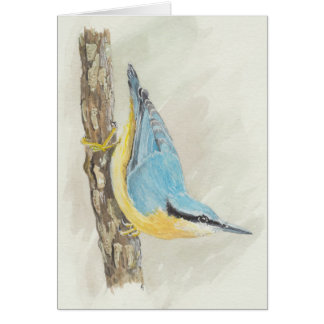 Blank Card - Red-Breasted Nuthatch