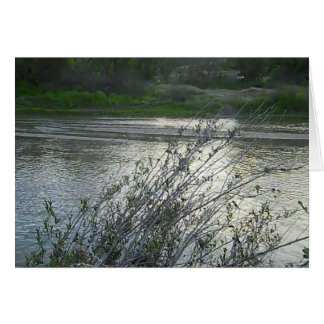 Blank Card: Salinas River in Paso Robles, 2010 Card