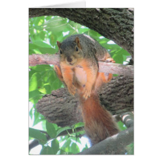 Blank Card with Funny Lazy Squirrel in a Tree