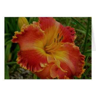 Blank Card with Orange Daylily