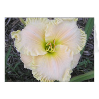 Blank Card with Perfect Form Daylily