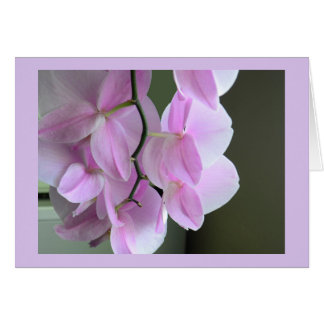 Blank Card with Pink Orchids