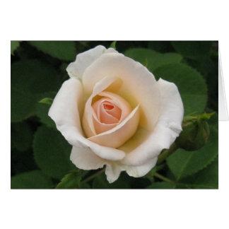 Blank-Cream Rose Card