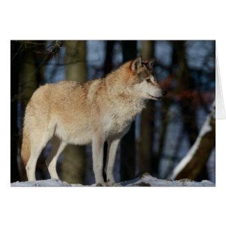 Blank Greeting Card: Alpha Wolf Card