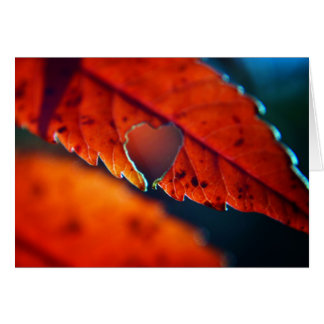 Blank Greeting Card - Fall Foliage