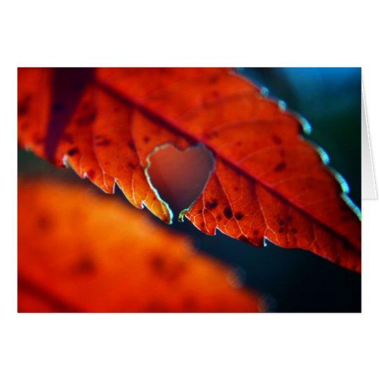 Blank Greeting Card - Fall Foliage