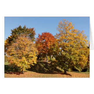 Blank Greeting Card: Fall Trees Card