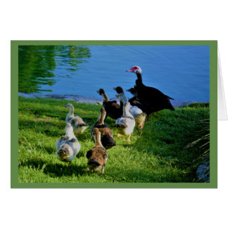 Blank Greeting Card of Muscovy Ducks