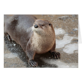 Blank Greeting Card: Otter on ice Card