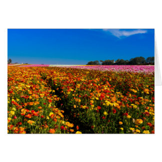 Blank greeting Card with Flower Fields on front