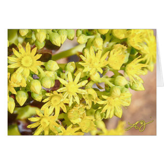 Blank Greeting Card with Yellow Succulent Blossoms