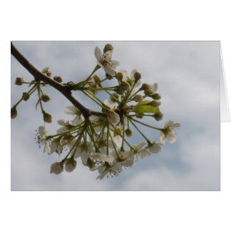 Blank Inside - Blossoms Greeting Card