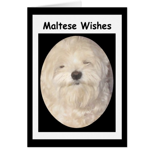Blank Maltese Wishes on Black & White Card
