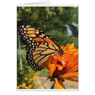blank monarch card