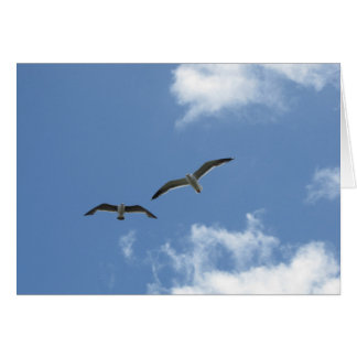 Blank Note Card--La Jolla Seagulls Card