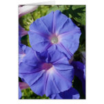 Blank Note Card, Morning Glory