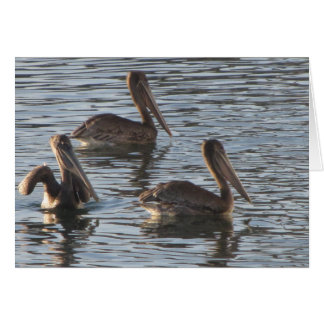 Blank Note Card--Pelicans Card