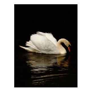 Blank Note Card with Beautiful Swan post card