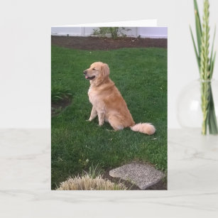Blank Note Card with Golden Retriever Jake