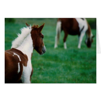 Blank Notecard_Horses Grazing in Summer Card