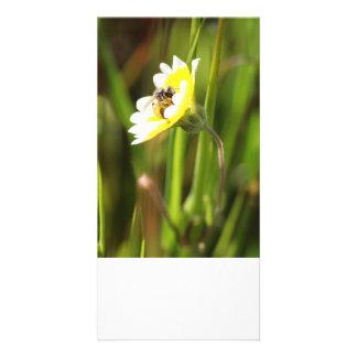 Blank Photo Card, Bumble Bee Photo Greeting Card