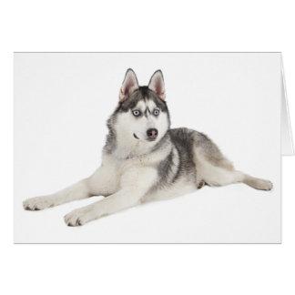 Blank Siberian Husky Puppy Dog Hello Love Miss You Card