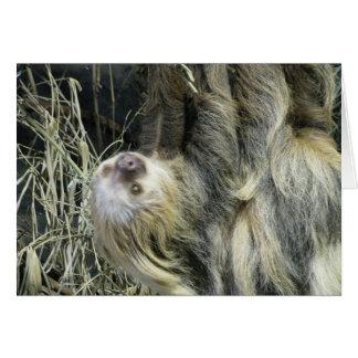 Blank Sloth Card