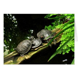 Blank-Turtles Rest Card