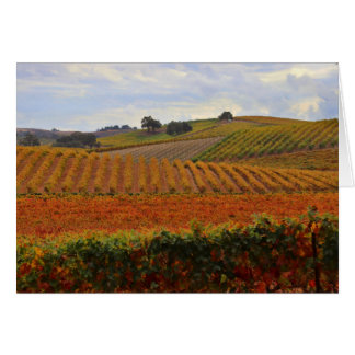 Blank Wine Vineyard Card