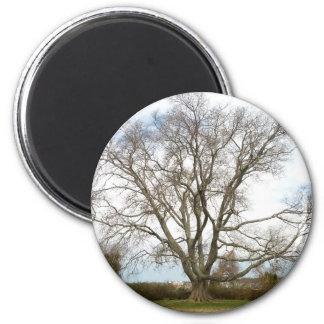 Blank - Wisdom Tree 2 Inch Round Magnet