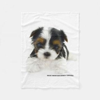 Blanket - Biewer Terrier Puppy