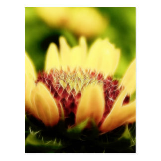 Blanket Flower Bud Postcard