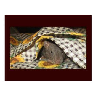 BLANKIE BABY RAT POSTCARD