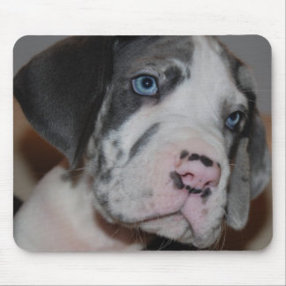 Blaue Augen Doggenwelpe Mouse Pad