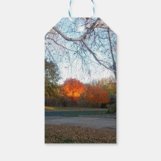 Blaze of Fall Gift Tags