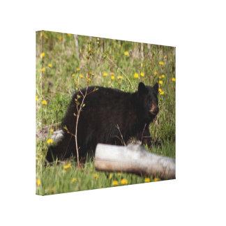 BLBC Black Bear Cub Canvas Print