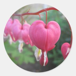 Bleeding Heart (Dicentra) Classic Round Sticker