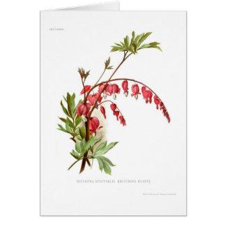 Bleeding Heart (Dicentra spectablis) Card