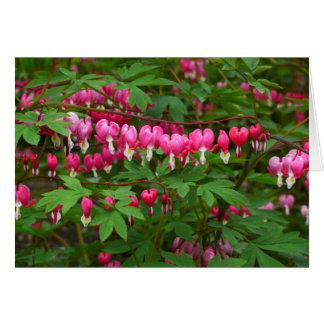 Bleeding Hearts Nature, Photo Card