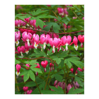 Bleeding Hearts Nature, Photo Letterhead